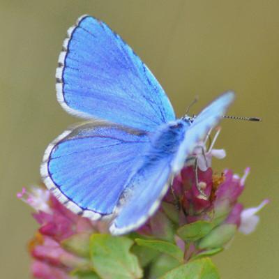papillons5